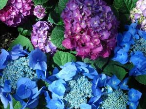 como flowers